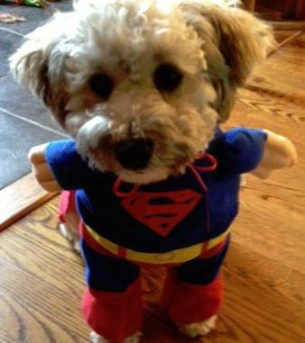 super-bark
