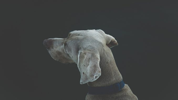 dog breed quiz