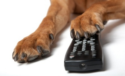 remote and paw
