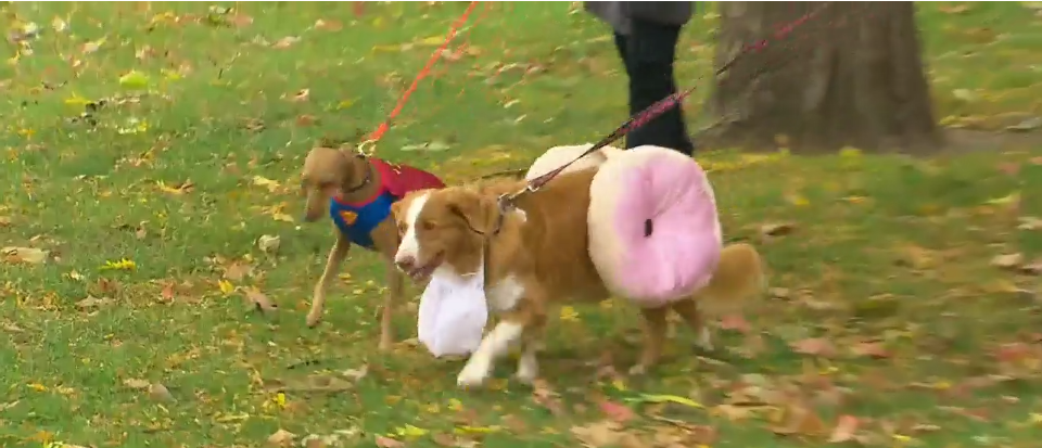 CTV Toronto evening news covered Howl'oween event