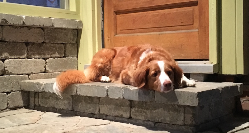 Dog waits on back porch instead of the couch