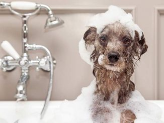 dog-in-bath-tub