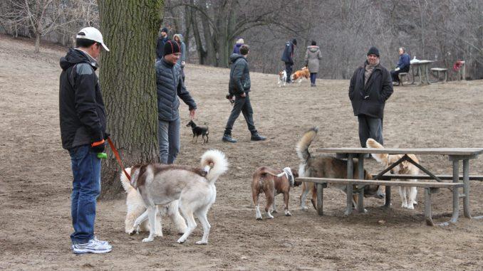Best Dog Parks Gta