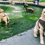 Berczy Pup Pic Contest - Amira