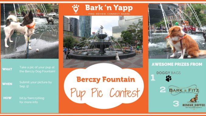 pup pic contest