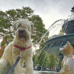 Pup Pic Finalist - Jasper