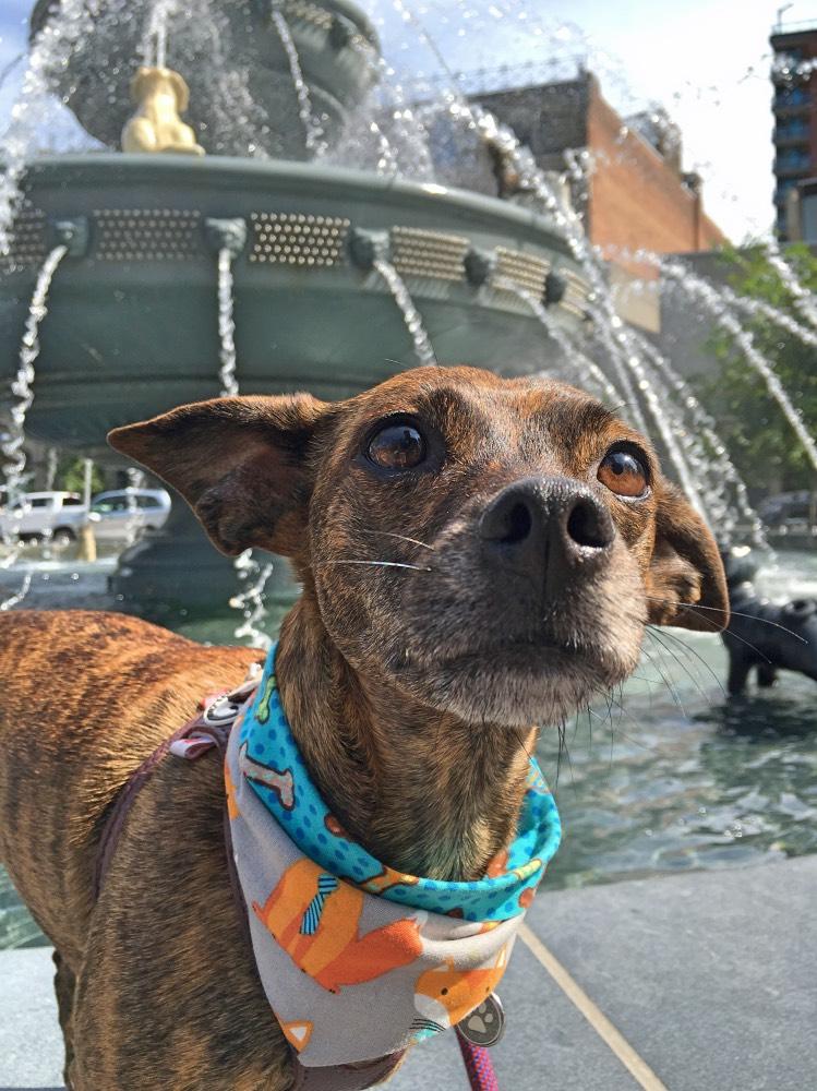 Pup Pic Finalist - Mila