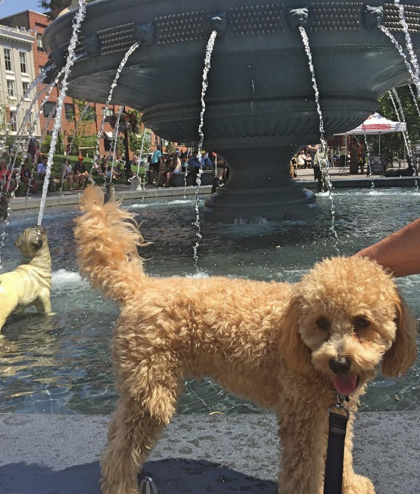 Pup Pic Finalist - Oakley