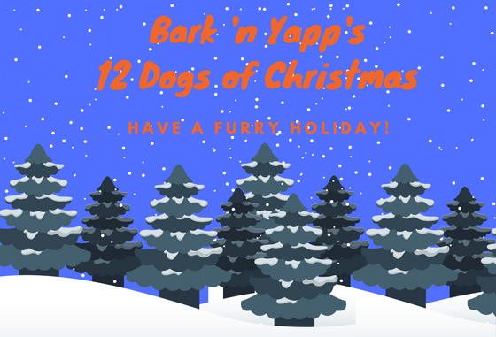 Bark 'n Yapp's 12 Dogs of Christmas