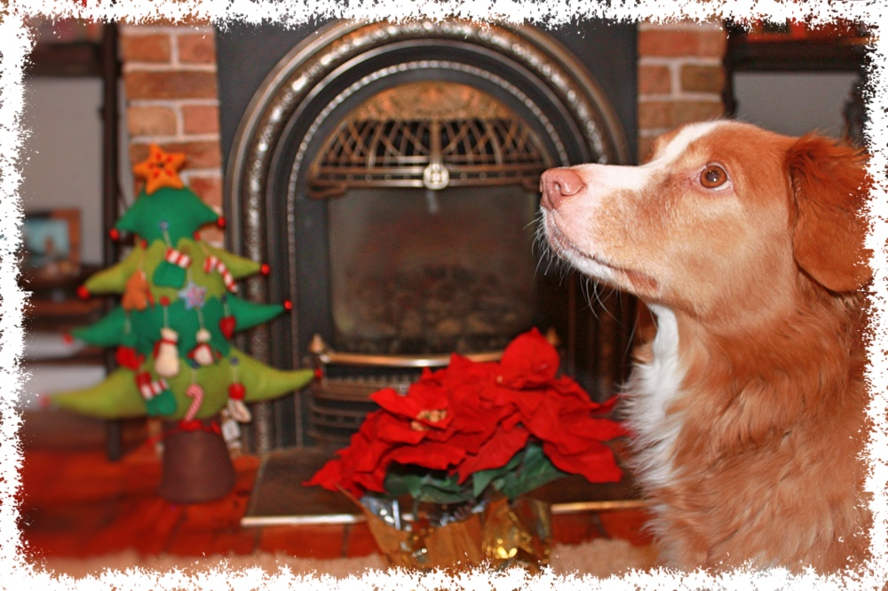 Bark 'n Yapp's 12 Dogs of Christmas - Chili