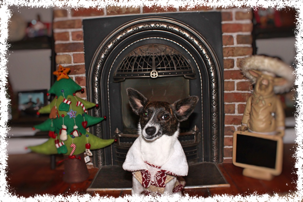 12 Dogs of Christmas - Petal