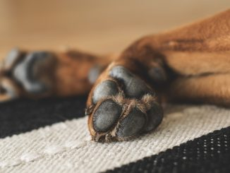 Soft paws after using paw balm