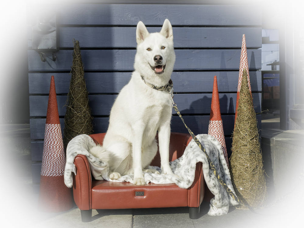 Bark 'n Yapp's 12 Dogs of Christmas - Hailey