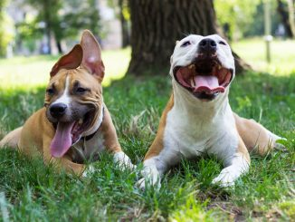 smiling-dogs