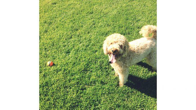 pup in field having fun