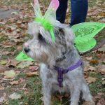 Cricket as Madam Butterfly