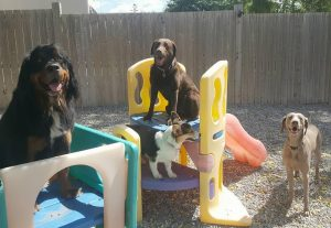 Dogs at K9's in Kahoots