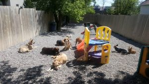 The dogs of K9's in Kahoots