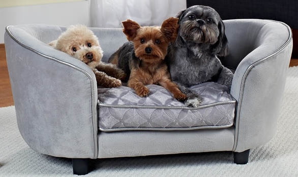 Dogs Own the Couch