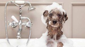 dog-in-bath-tub