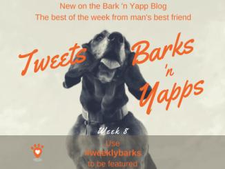 Yapps Week 8