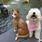 Pup Pic Finalist - Mochi