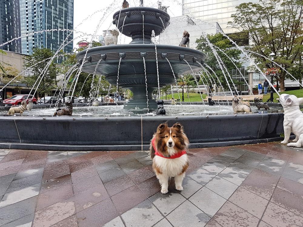 Pup Pic Finalist - Tempo