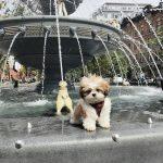 Pup Pic Finalist - Toby