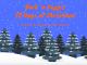 Bark 'n Yapp's 12 Dogs of Christmas