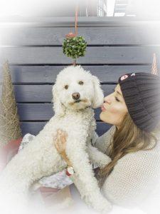 Bark 'n Yapp's 12 Dogs of Christmas - Charlie
