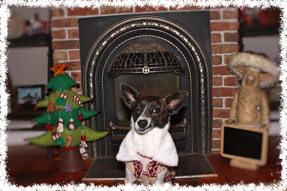 12 Dogs of Christmas - Petal