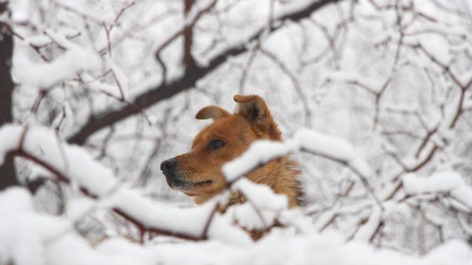 Winter Dog Safety