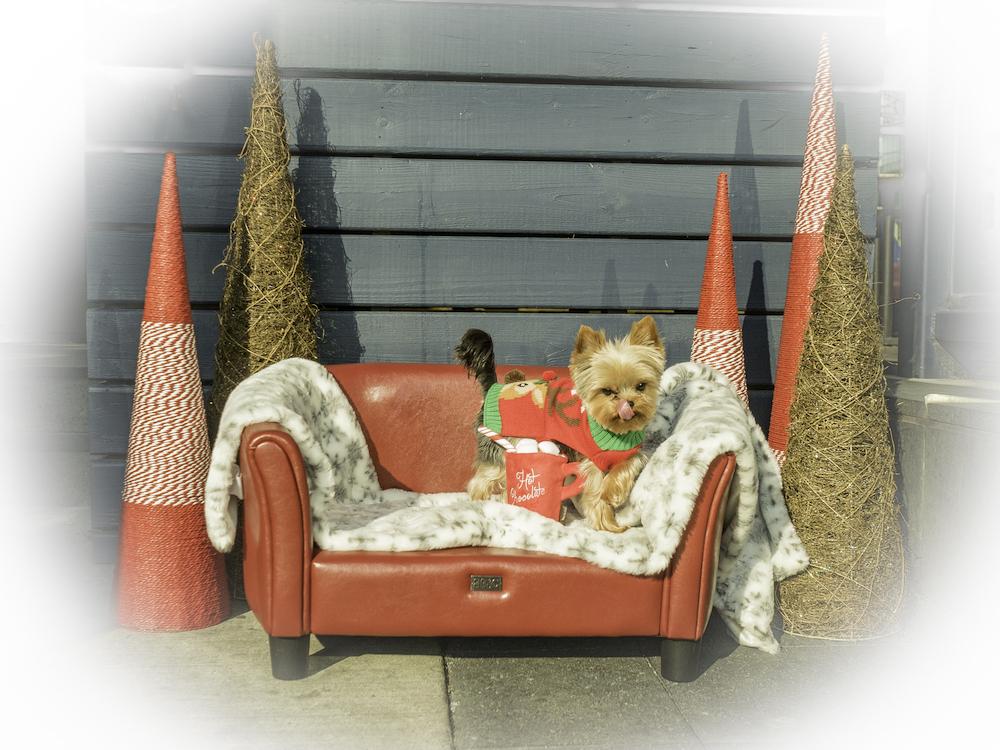 Bark 'n Yapp's 12 Dogs of Christmas - Winston