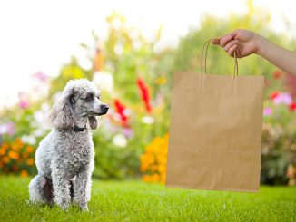 Going Shopping for Puppy