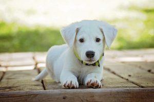 furever friend pup