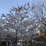 Beautiful Trinity Bellwoods Park